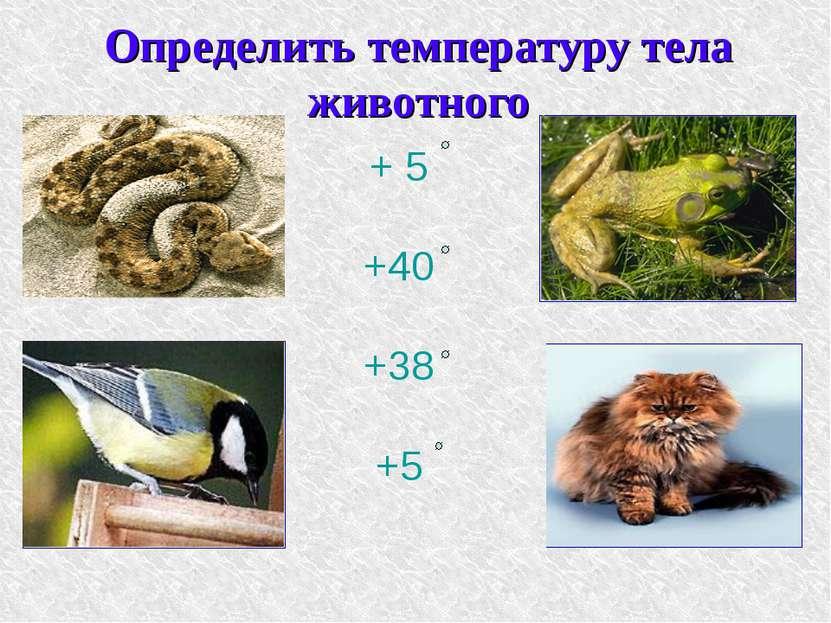 Определить температуру тела животного + 5 +40 +38 +5