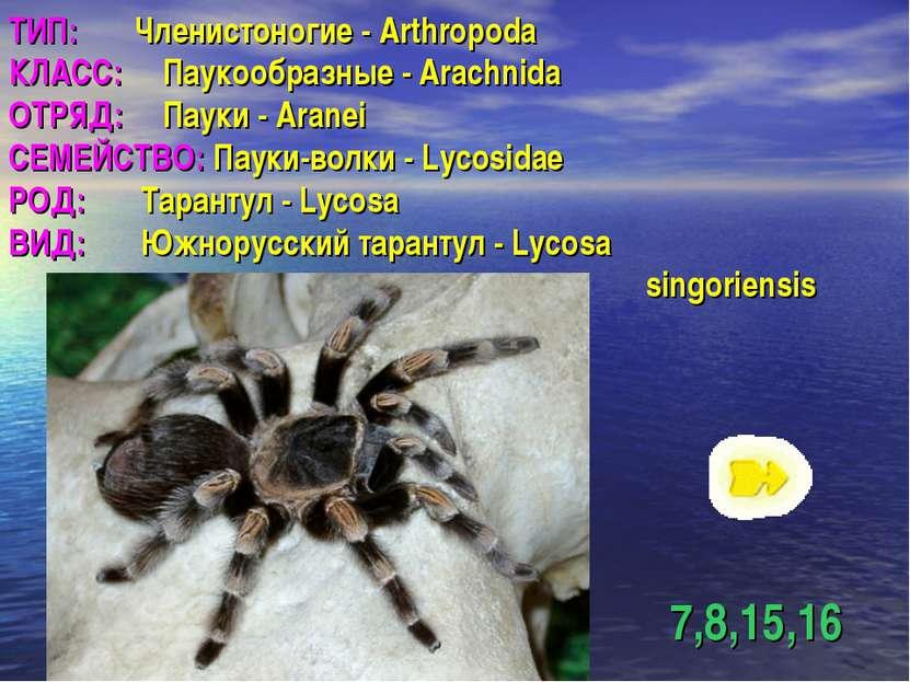 ТИП: Членистоногие - Arthropoda КЛАСС: Паукообразные - Arachnida ОТРЯД: Пауки...