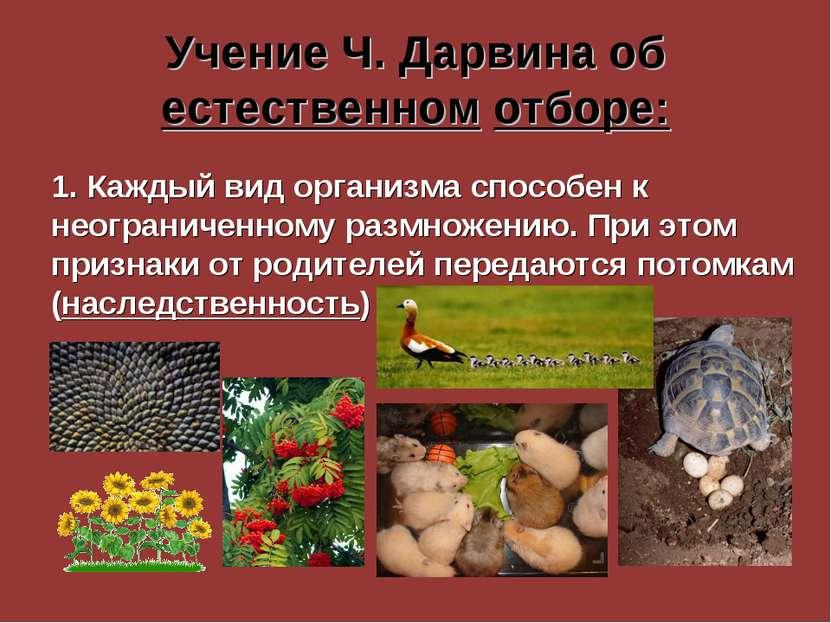 Учение Ч. Дарвина об естественном отборе: 1. Каждый вид организма способен к ...