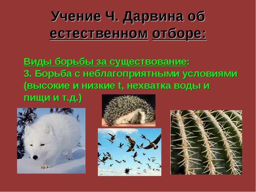 Учение Ч. Дарвина об естественном отборе: Виды борьбы за существование: 3. Бо...