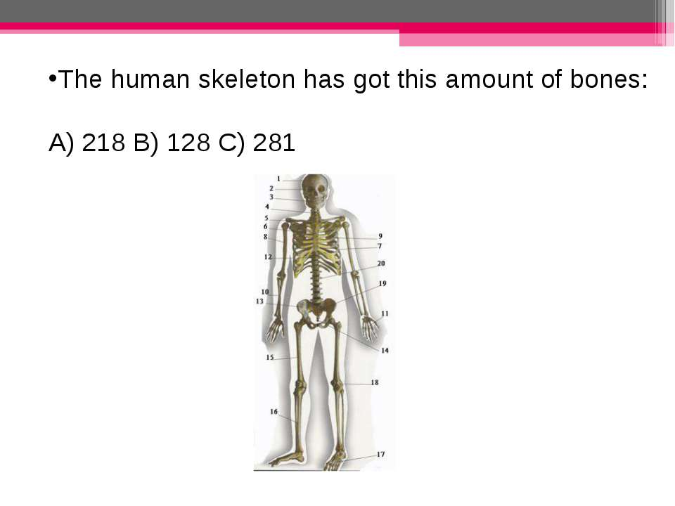 The human skeleton has got this amount of bones: A) 218 B) 128 C) 281