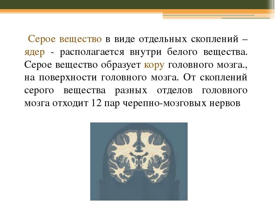 Серое вещество в виде отдельных скоплений – ядер - располагается внутри белог...