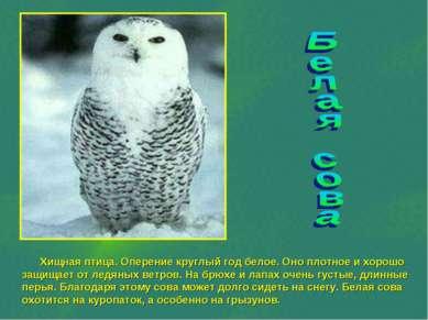 Хищная птица. Оперение круглый год белое. Оно плотное и хорошо защищает от ле...