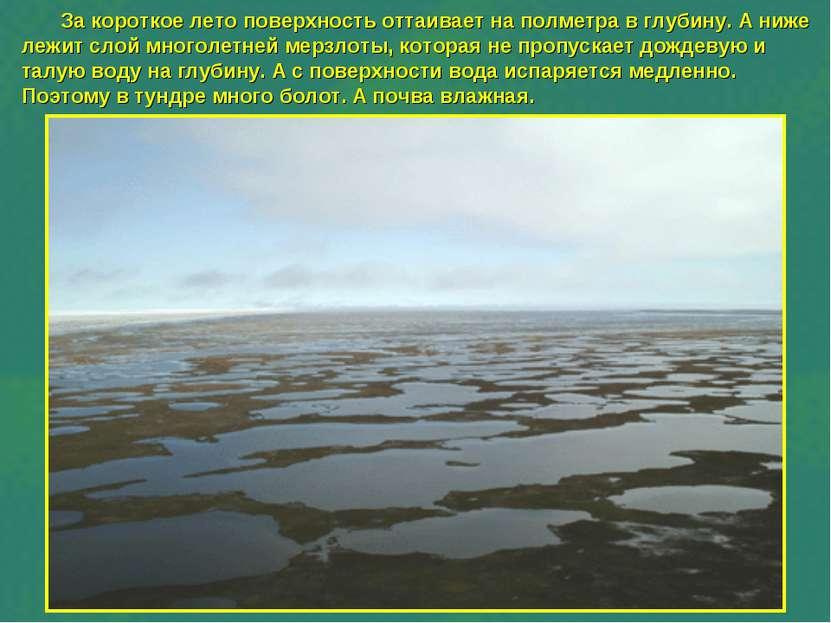 За короткое лето поверхность оттаивает на полметра в глубину. А ниже лежит сл...