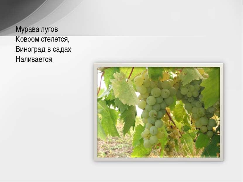Мурава лугов Ковром стелется, Виноград в садах Наливается.