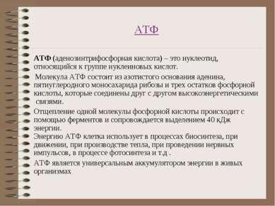 АТФ АТФ (аденозинтрифосфорная кислота) – это нуклеотид, относящийся к группе ...