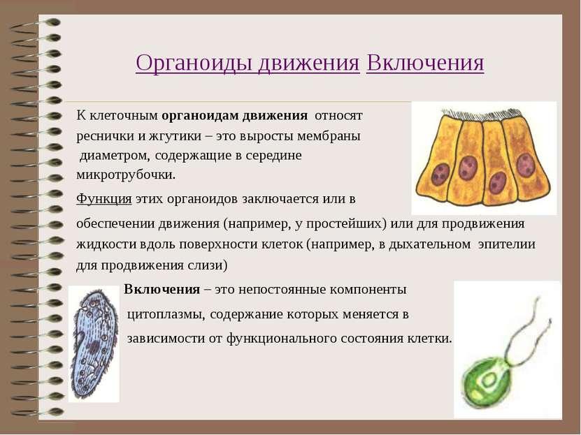 Органоиды движения Включения К клеточным органоидам движения относят реснички...