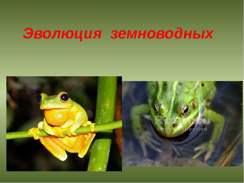 Эволюция земноводных