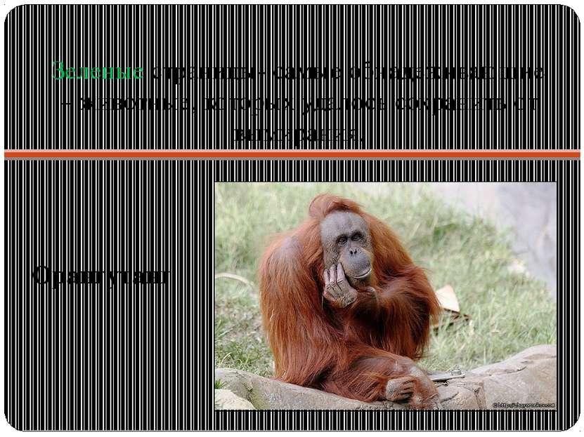 Зеленые страницы- самые обнадеживающие – животные, которых удалось сохранить ...