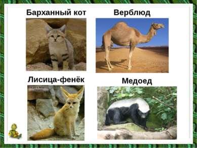 Барханный кот Верблюд Медоед Лисица-фенёк