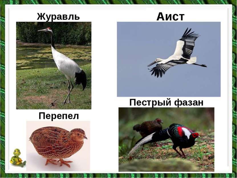 Журавль Перепел Аист Пестрый фазан