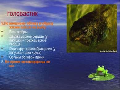 головастик 1.По внешнему облику и образу жизни похож на рыбу: Есть жабры Двух...