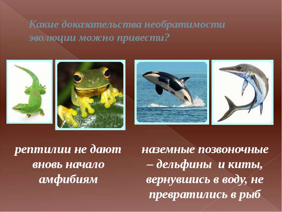 Какие доказательства необратимости эволюции можно привести? рептилии не дают ...