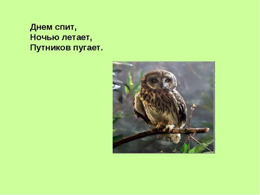 Днем спит, Ночью летает, Путников пугает.