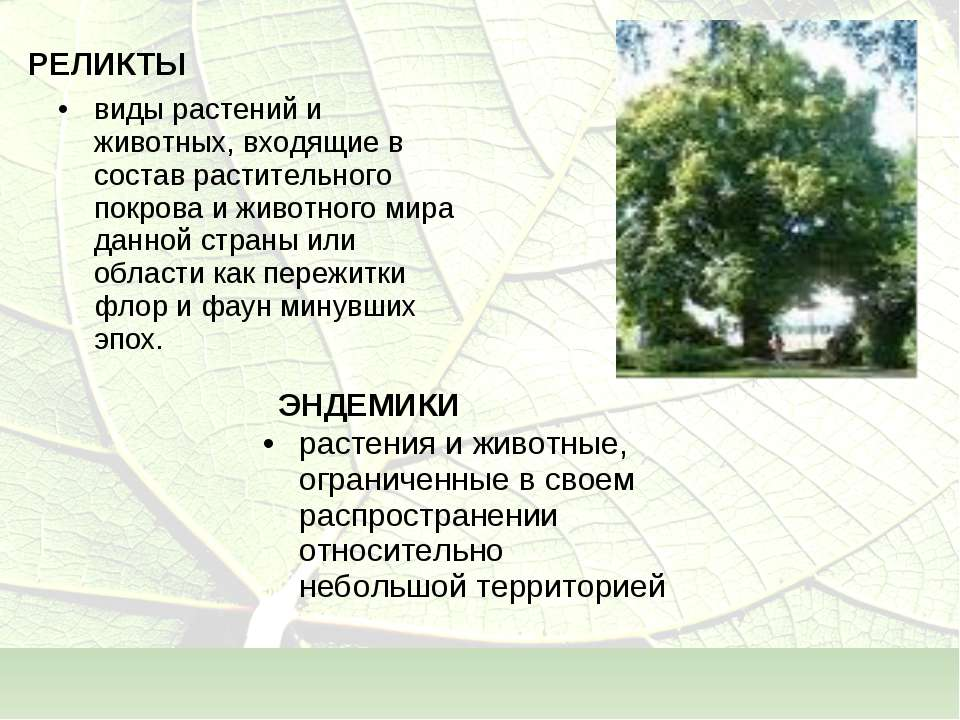 РЕЛИКТЫ виды растений и животных, входящие в состав растительного покрова и ж...
