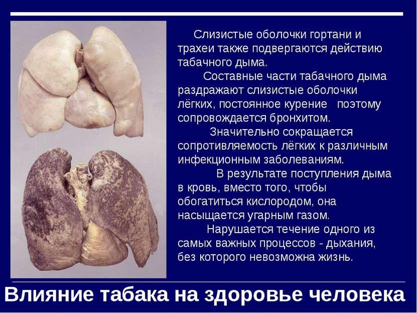 Слизистые оболочки гортани и трахеи также подвергаются действию табачного дым...