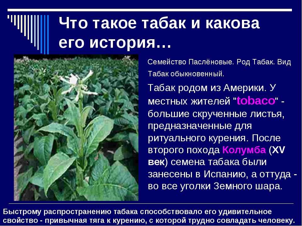 Что такое табак и какова его история… Семейство Паслёновые. Род Табак. Вид Та...