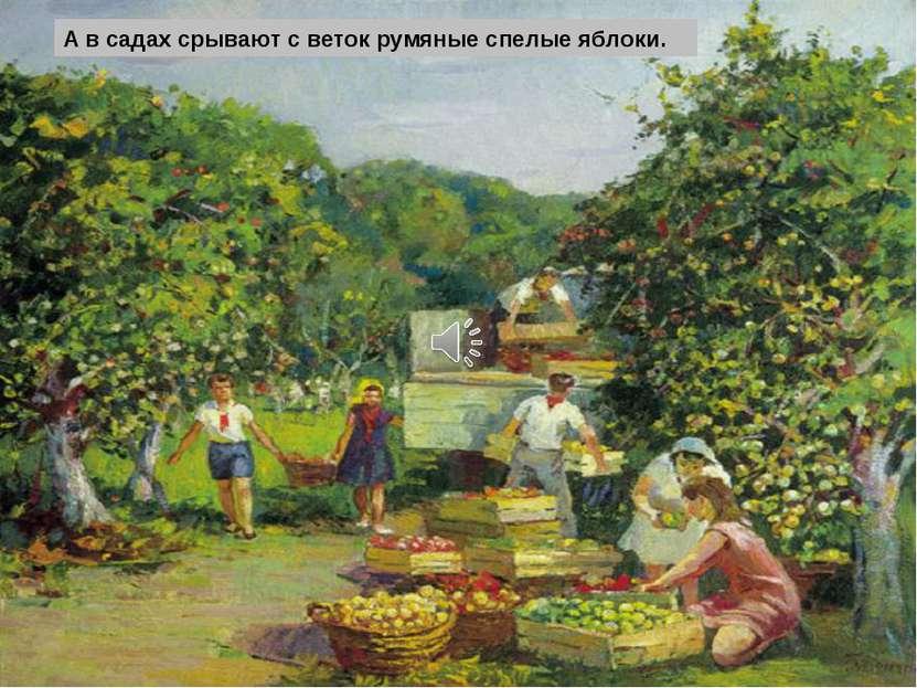 А в садах срывают с веток румяные спелые яблоки.