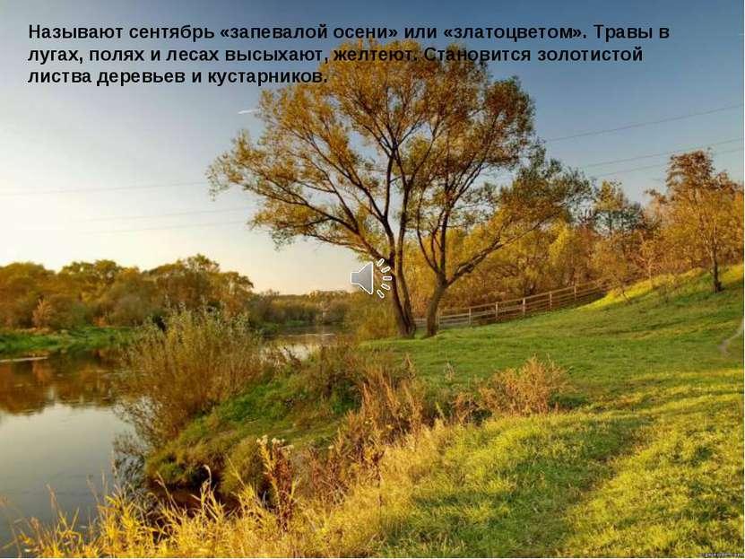 Называют сентябрь «запевалой осени» или «златоцветом». Травы в лугах, полях и...