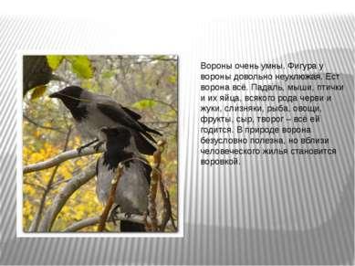 Вороны очень умны. Фигура у вороны довольно неуклюжая. Ест ворона всё. Падаль...