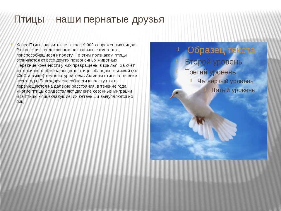 Птицы – наши пернатые друзья Класс Птицы насчитывает около 9.000 современных ...