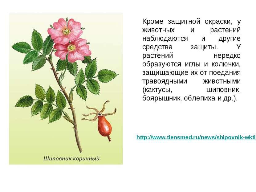 Кроме защитной окраски, у животных и растений наблюдаются и другие средства з...