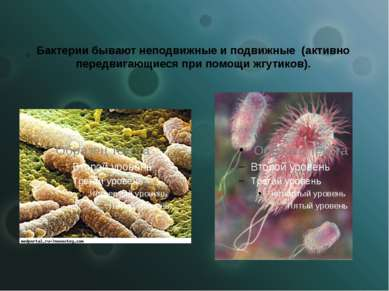 Бактерии бывают неподвижные и подвижные (активно передвигающиеся при помощи ж...