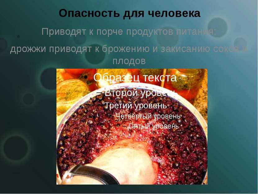 Опасность для человека Приводят к порче продуктов питания: дрожжи приводят к ...