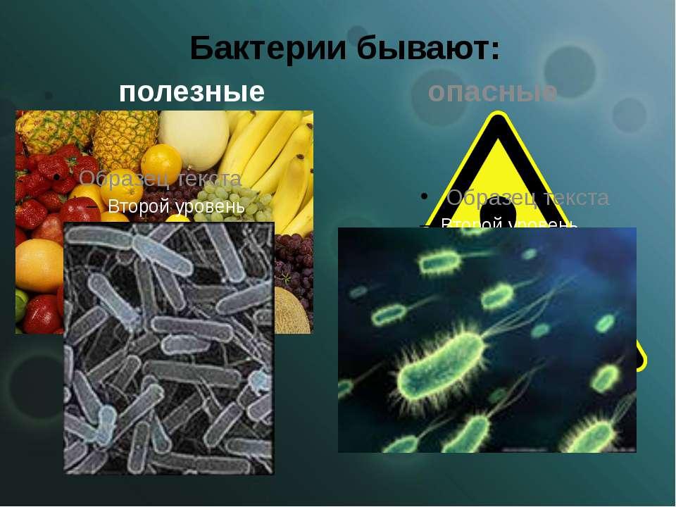 Бактерии бывают: полезные