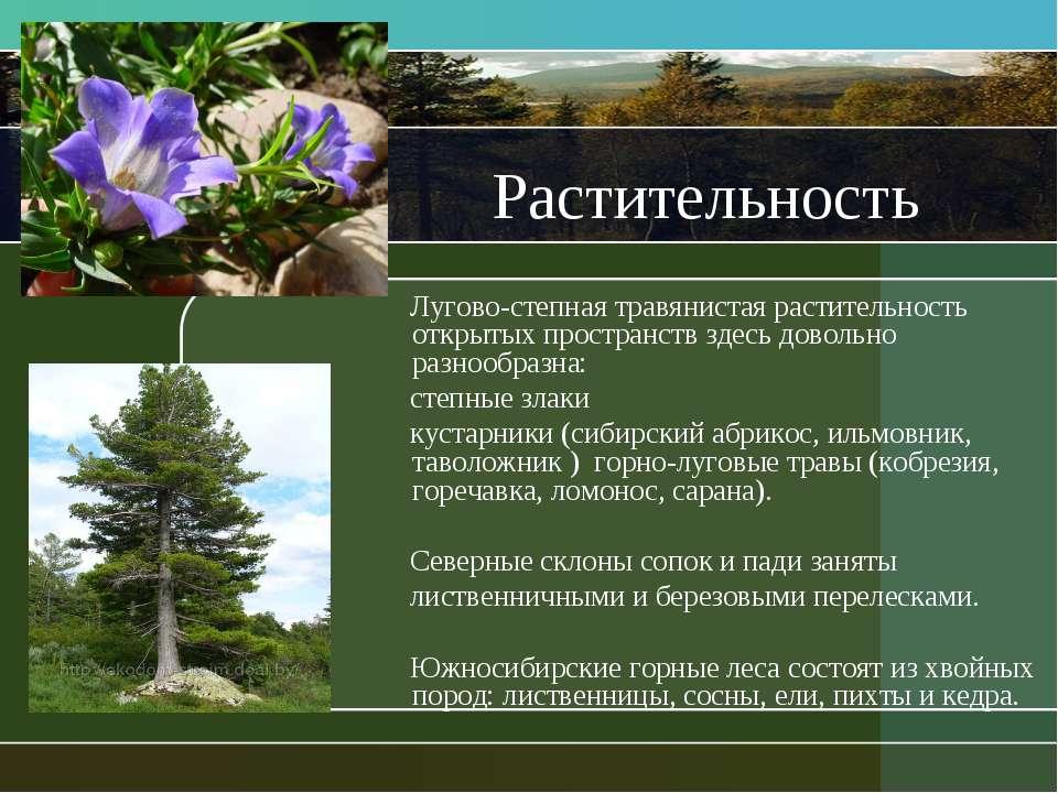 Растительность Лугово-степная травянистая растительность открытых пространств...