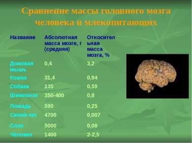 Отделы головного мозга: Продолговатый; Мост; Средний; Мозжечок; Промежуточный...