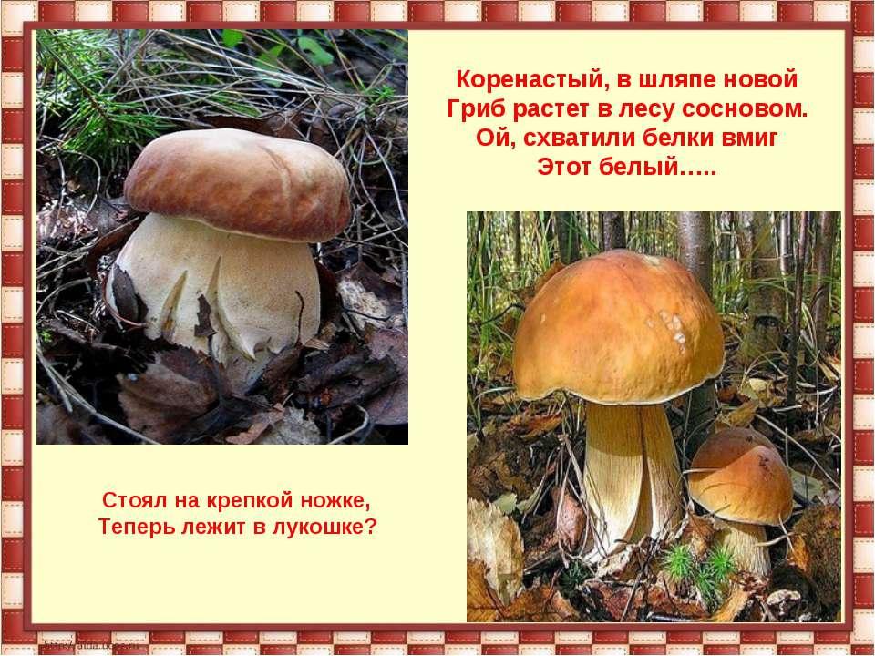 Коренастый, в шляпе новой Гриб растет в лесу сосновом. Ой, схватили белки вми...
