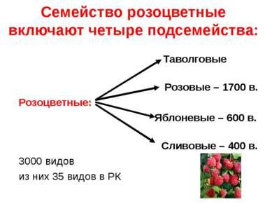 Семейство розоцветные включают четыре подсемейства: Таволговые Розовые – 1700...