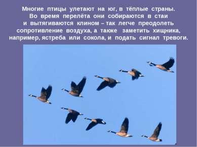 Многие птицы улетают на юг, в тёплые страны. Во время перелёта они собираются...
