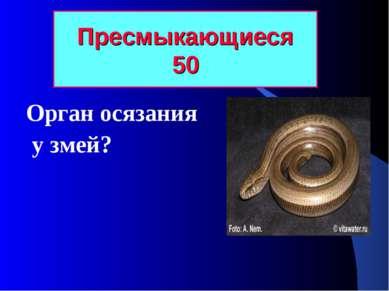 Пресмыкающиеся 50 Орган осязания у змей?