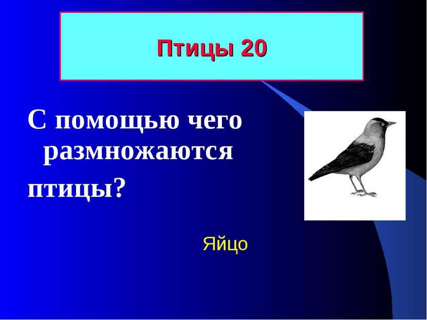 Птицы 20 С помощью чего размножаются птицы? Яйцо