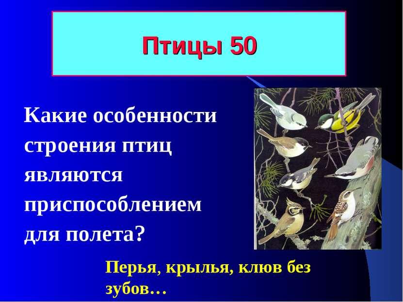 Птицы 50 Какие особенности строения птиц являются приспособлением для полета?...