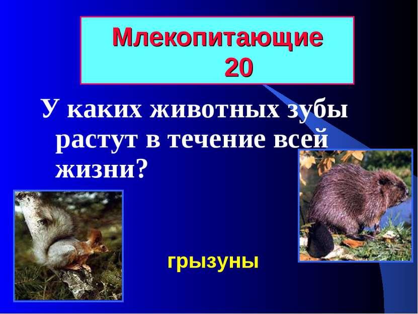 Млекопитающие 20 У каких животных зубы растут в течение всей жизни? грызуны