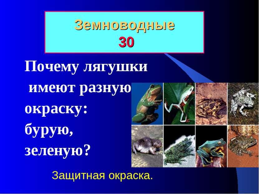 Земноводные 30 Почему лягушки имеют разную окраску: бурую, зеленую? Защитная ...