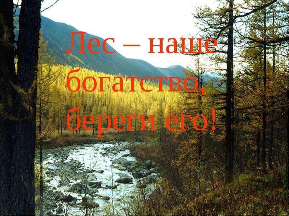 Лес – наше богатство, береги его!