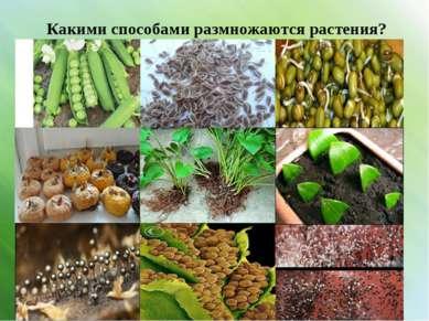Какими способами размножаются растения?