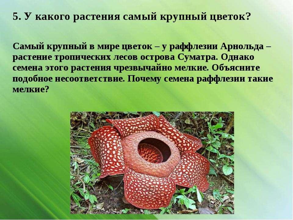 5. У какого растения самый крупный цветок? Самый крупный в мире цветок – у ра...