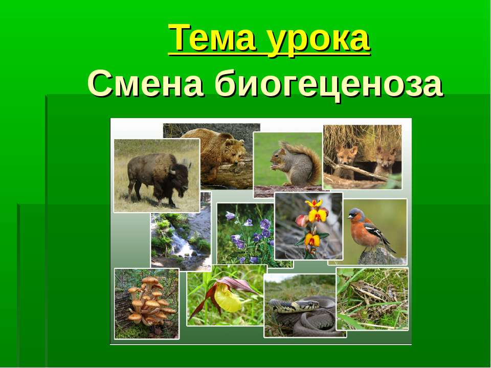 Тема урока Смена биогеценоза