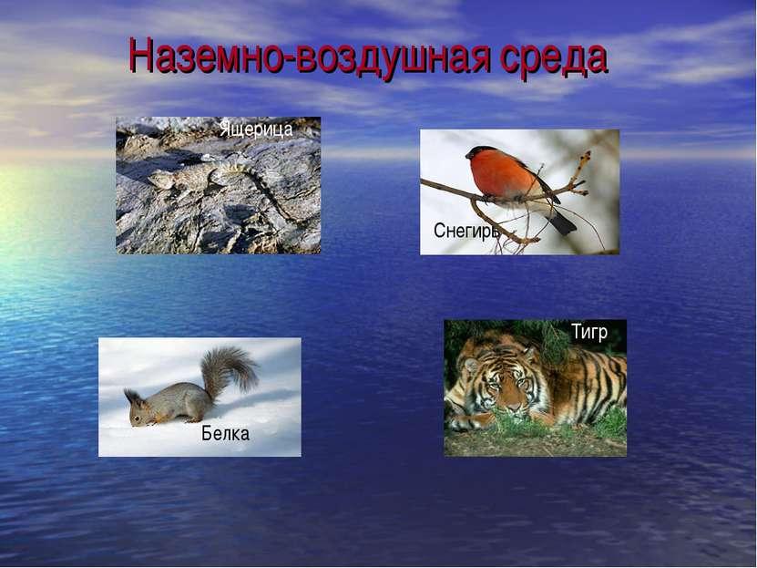 Наземно-воздушная среда Ящерица Снегирь Белка Тигр