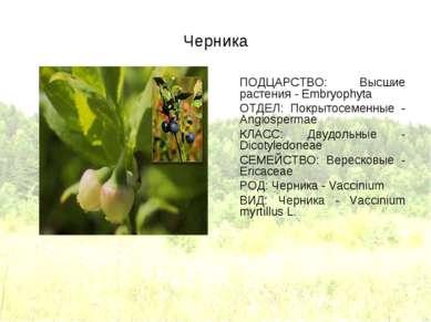 Черника ПОДЦАРСТВО: Высшие растения - Embryophyta ОТДЕЛ: Покрытосеменные - An...