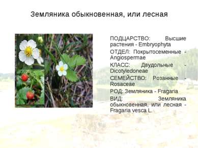 Земляника обыкновенная, или лесная ПОДЦАРСТВО: Высшие растения - Embryophyta ...