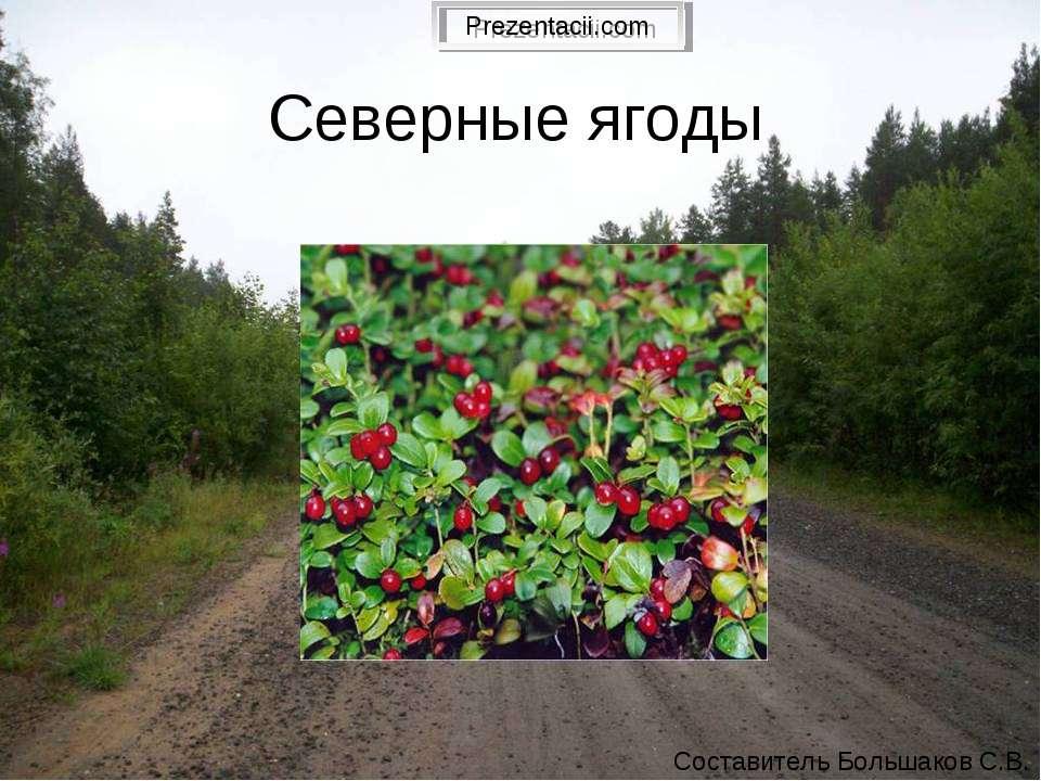 Северные ягоды Составитель Большаков С.В.
