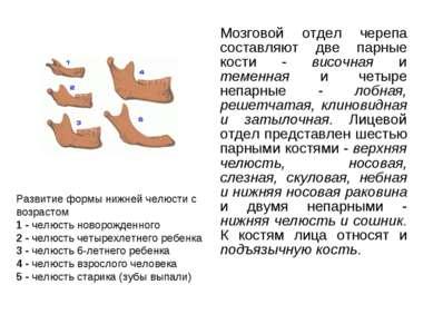 Мозговой отдел черепа составляют две парные кости - височная и теменная и чет...