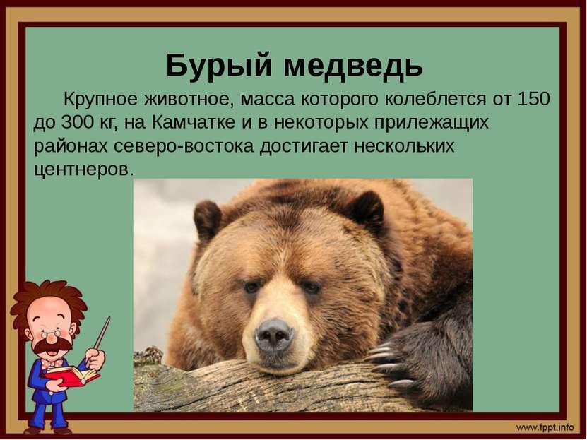 Бурый медведь Крупное животное, масса которого колеблется от 150 до 300 кг, н...