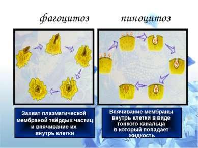 фагоцитоз пиноцитоз Захват плазматической мембраной твёрдых частиц и впячиван...